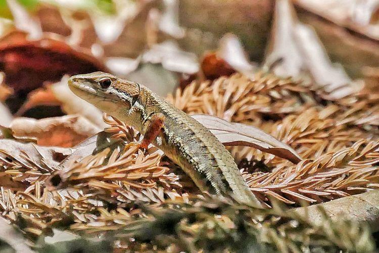 Reptile Nature