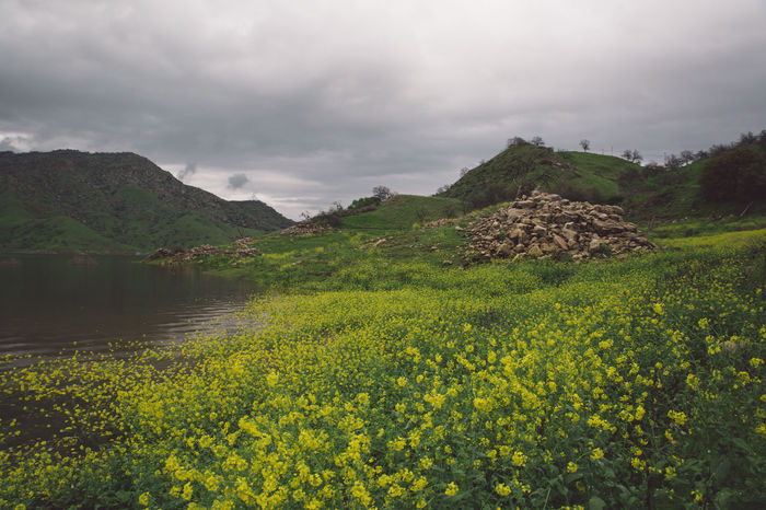 Beauty In Nature Cloudy Day Flood Flooded Flowers Lake Lake Kaweah Landscape Mountain Nature No People Outdoors Rainy Scenics Sky Tranquil Scene Tranquility Water Yellow Paint The Town Yellow