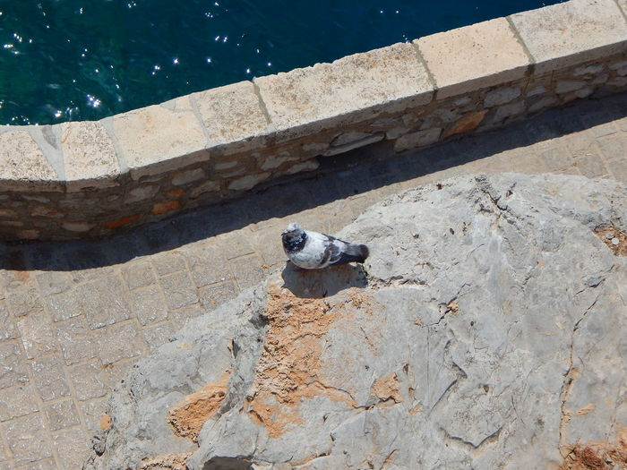 High angle view of bird perching on ground