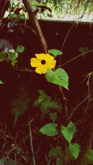 Uma flor no caminho! First Eyeem Photo