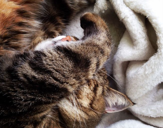 Cat♡ Chat Animal