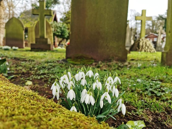 White flowering plants at cemetery