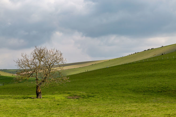 A lone tree in the South Downs in Sussex Sussex South Downs Grass Sky Cloud - Sky Plant Landscape Land Green Color Field Environment Scenics - Nature Tree Tranquility Non-urban Scene Tranquil Scene Nature Beauty In Nature No People Day Horizon Over Land Outdoors Tree