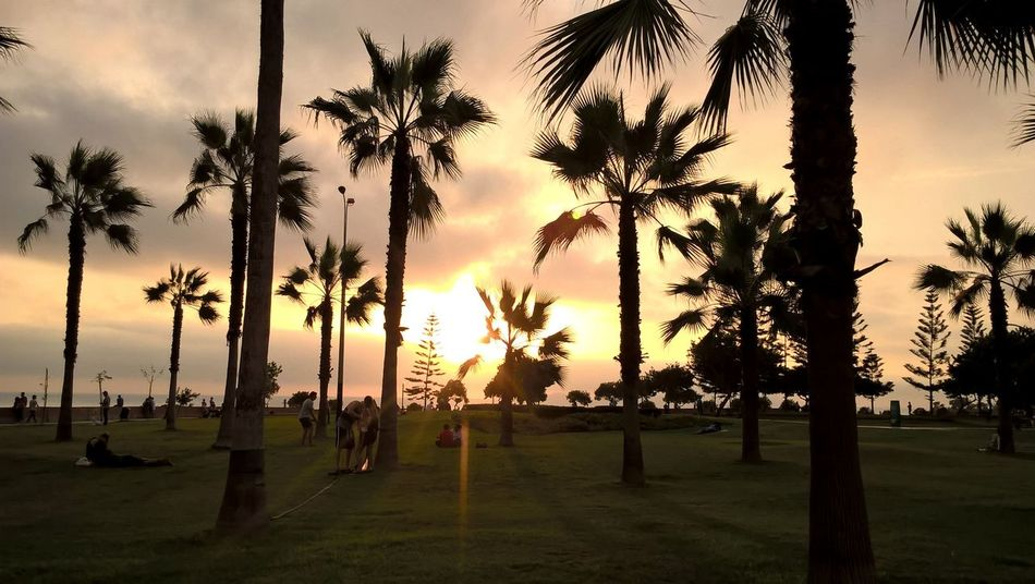 EyEmNewHere Eyem Select Been There. Palm Tree Tree Sunset Silhouette Cloud - Sky Sky Landscape Tranquility Grass Beauty In Nature Outdoors Nature Beach People Sunset_collection Moments Amazing View Travel Destinations Scenics Vacations Inspired By Beauty Artistic
