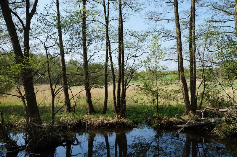 Naturschutzgebiete Mecklenburger Seenplatte Moorland Plant Tree Water Tranquility Reflection Growth Nature No People Sky Beauty In Nature Lake Scenics - Nature Outdoors Forest Tree Trunk