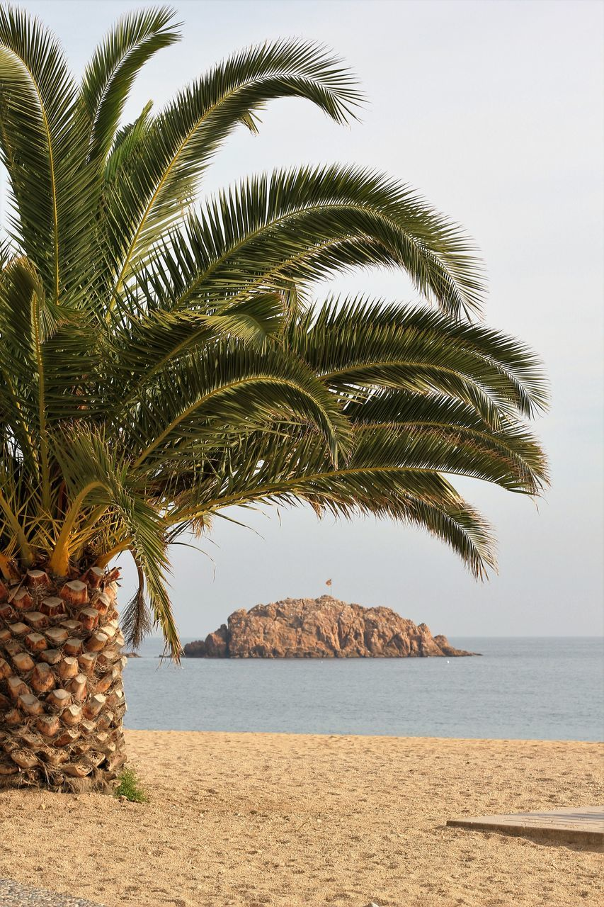 View Of Cropped Palm Tree On Calm Beach