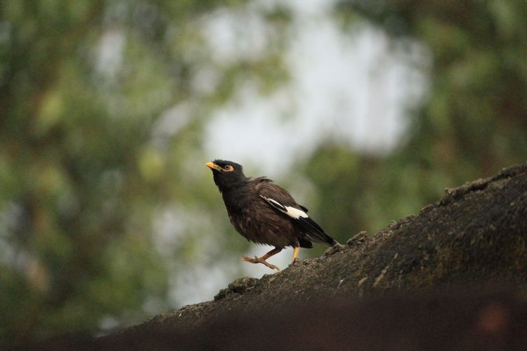 Bird Animals In The Wild Animal Wildlife One Animal Perching Animal Themes Day No People Bird Of Prey Nature Outdoors Close-up Tree