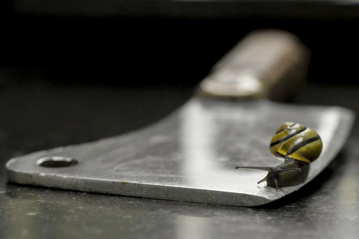 Walking on the edge... Snail Knife Sharpness Yellow Walking Anymal Black Background Studio Shot Table Close-up Crawling Slow Slimy EyeEmNewHere