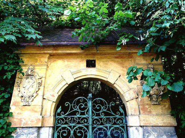 Gate of a Neglected School Architecture Entrance Door Tree Old School Romance Old Ruin Old School Gate Growth No People Arch Building Exterior Built Structure Outdoors Irongate Green Iron Gate Green Gate Hungary Buda