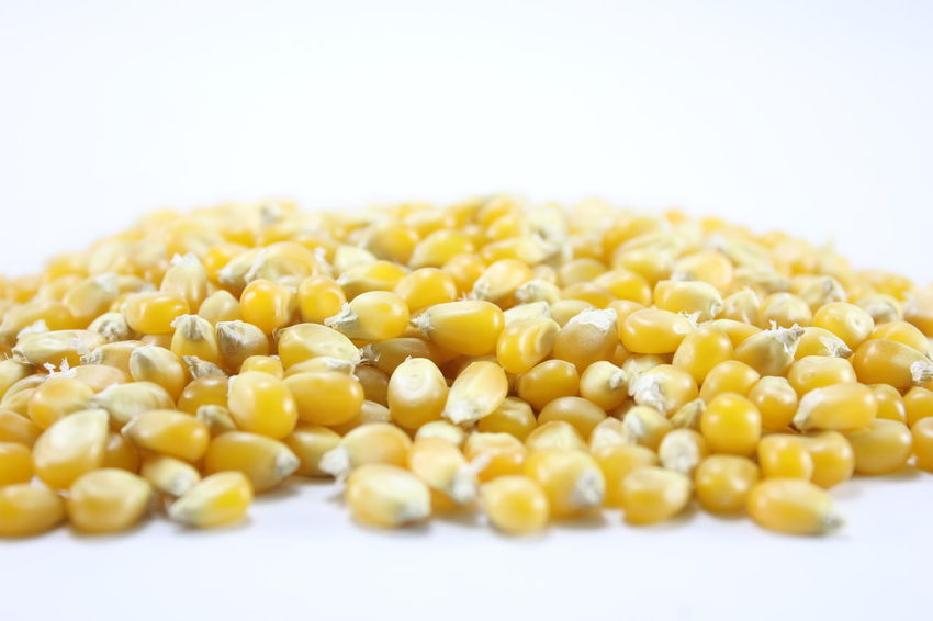 Corn kernels for making popcorn on a white background. Corn Kernels For Making Popcorn On A White Background. Close-up Corn Food Food And Drink Freshness Healthy Eating No People Studio Shot White Background Yellow