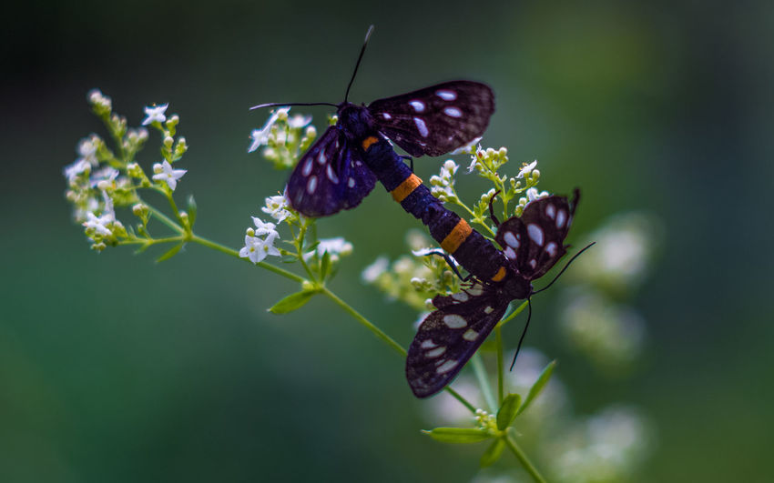 Animal Themes Animal Wildlife Animals In The Wild Beauty In Nature Butterfly - Insect Close-up Day Flower Focus On Foreground Fragility Freshness Growth Insect Nature No People One Animal Outdoors Plant Pollination