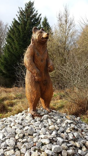 Bienenhotel Bee Hotel Bear Sculpture Creativity Trees No People Outdoors Nature Statue Day Sunlight Stones Harz Mountains, Germany