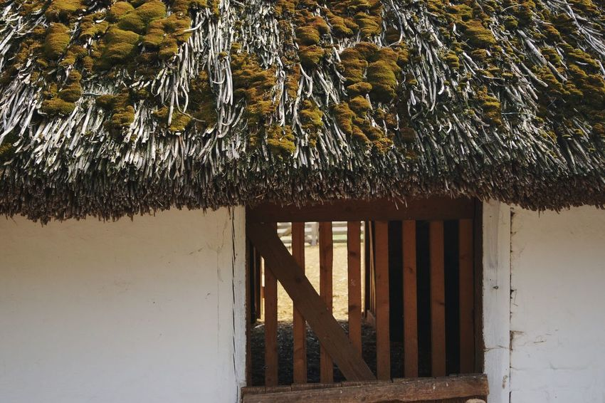 House Built Structure No People Water Architecture Roof Building Exterior Nature Close-up Outdoors Day Tree Reed Rooftop No Filter, No Edit, Just Photography Architecture Traditional Hungarian Reed Rooftop Folklore Hungarian