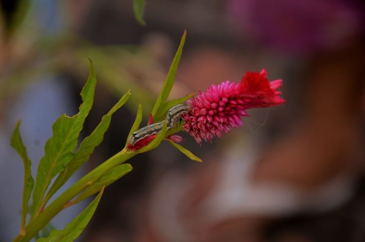 Freshness Green Growth Nature Pink Plant Beauty In Nature Close-up Contrast Flower Flower Head Garden Growth Outdoors Worm