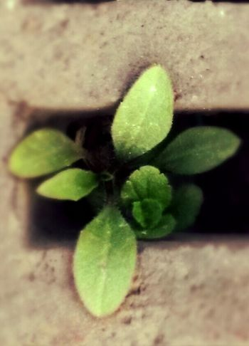Tiny plant growing out of a sewer Taking Photos Eye4photography  Quetzalcoatl Nature