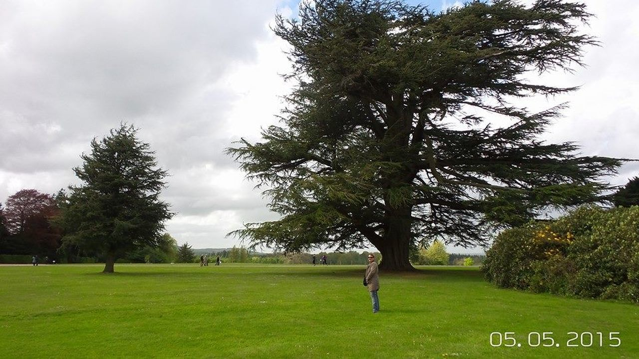 tree, grass, green color, growth, nature, field, day, cloud - sky, sky, outdoors, beauty in nature, landscape, golf, one person, green - golf course, golf course, people