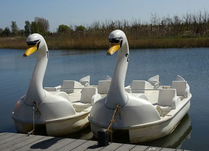 Swanboats Nature At Your Doorstep Relaxing EyeEm Nature Lover Duckpond Enjoying The Sun