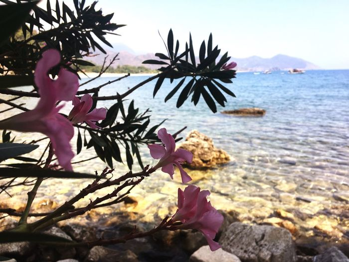 Olympos Dericious Mediterriansea Flower Nature Sea Day Freshness