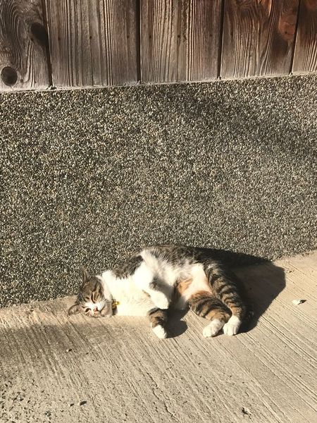 Animal Themes Domestic Animals Pets Domestic Cat Mammal High Angle View Feline No People Lying Down One Animal Sunlight Day Outdoors Nature IPhone Iphone7 IPhoneography Tadaa Friends Tadaa Community