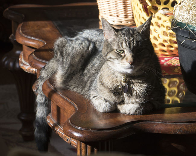 Cat sitting on chair at home