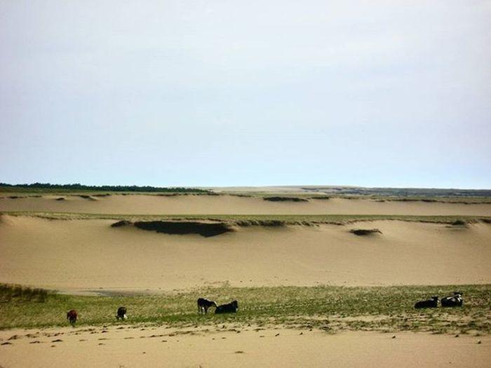 Love this Nameless place, near to Cabopolonio Cabo Calm Peace Sand Sky Cows Uruguay Uruguaynatural Audiovisualuruguay