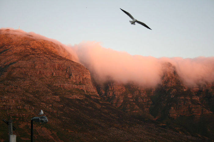 Houte Bay, South Africa Animal Themes Animals In The Wild Beauty In Nature Bird Capetown Clear Sky Clouds Day Flying Landscape Mountain Nature No People One Animal Outdoors Scenics Seagull Sky Tablemountain