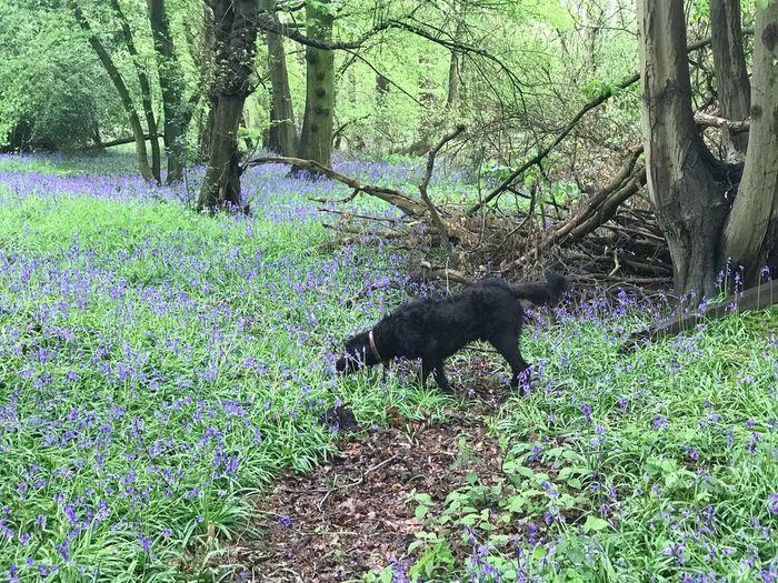 Plant Tree Animal Animal Themes One Animal Mammal Vertebrate Domestic Animals Nature Pets Land Tree Trunk Dog Canine
