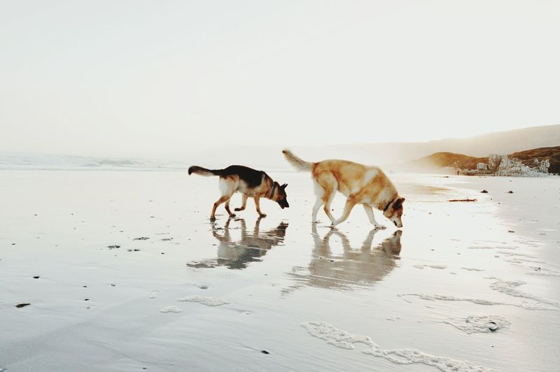 Water Beach Dog Togetherness Sea Pets Jumping Young Animal Sky The Minimalist - 2019 EyeEm Awards My Best Photo