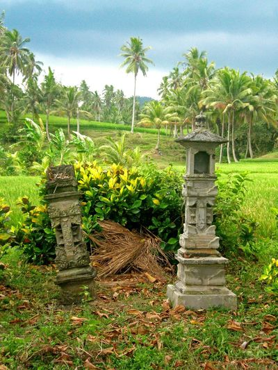 The Balinese believe there are spirits everywhere; trees, stones, bodies of water, and pieces of farmland. So, everywhere can be seen shrines like this for simple offerings of flowers, rice and incense. Bali, Indonesia Farmland Green Color Shrine Sky And Clouds Agriculture Animism Balinese Culture Beauty In Nature Day Field Grass Growth Landscape Nature No People Outdoors Palm Tree Religion And Beliefs Rice Paddy Scenics Sky Tranquility Tree