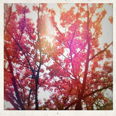 #lensflare_masters #flowers #sunray #rose #igersfrance Flowers Rosé Sunray Igersfrance Lensflare_masters