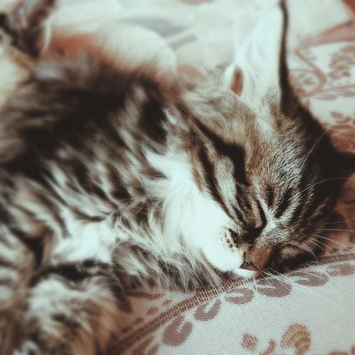 Cat♡ Love Relaxing Followme my kitten,but he went to my grandmother