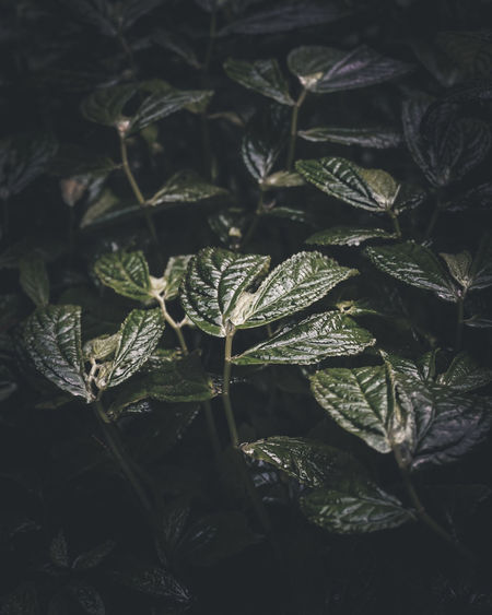 tropical leaves Moodygrams Moody Moody Weather Moody Nature Moodyphotography Leaf Leafs Photography Leaf Photography Nature Nature Photography Naturephotography Nature_collection