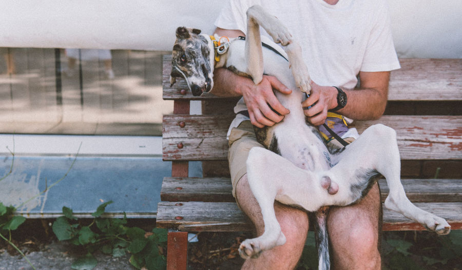 Midsection of man playing with dog