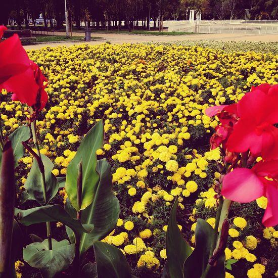 🌺🌼🌺 Flower
