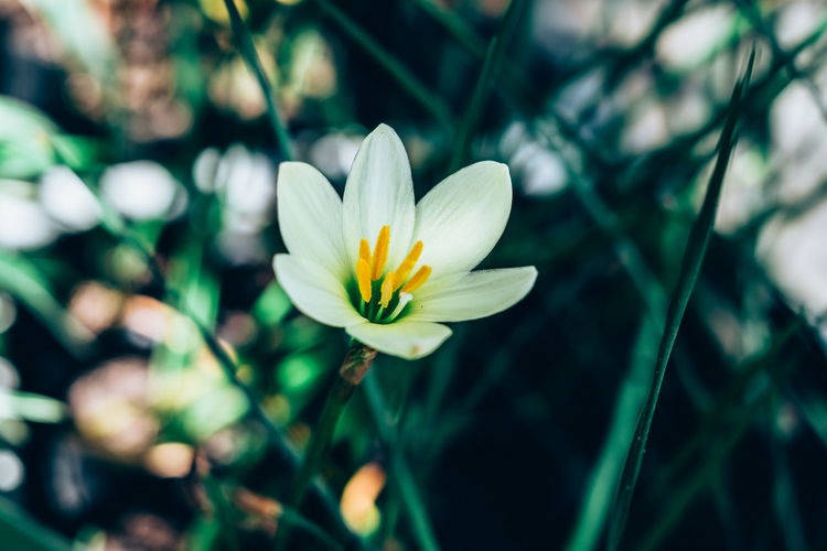 Flower Flowering Plant Freshness Plant Fragility Beauty In Nature Petal Growth Close-up Flower Head White Color Nature Day No People Selective Focus Pollen Outdoors Lily Backgrounds Copy Space Green Color Pistil Bokeh Abstract Delicate My Best Photo Springtime Decadence