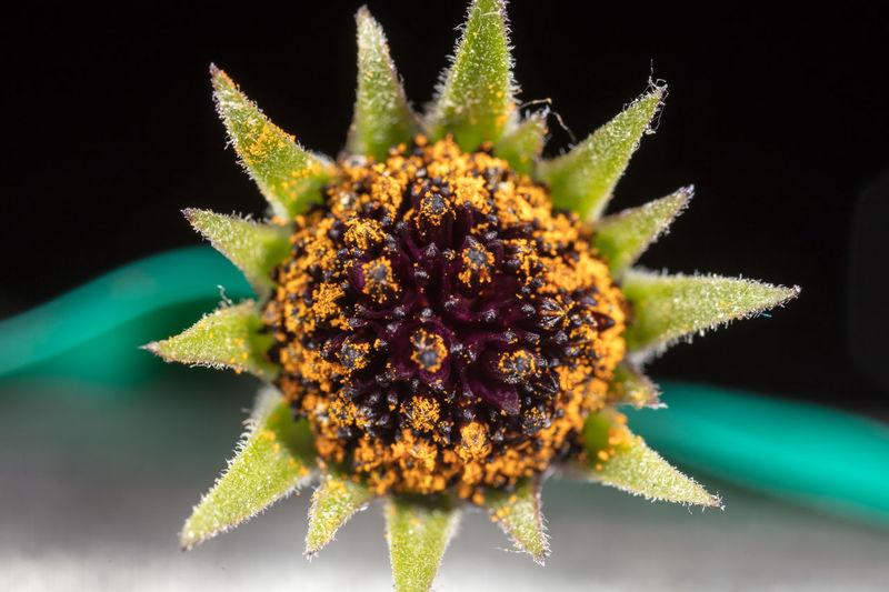 Macro Photography Nature Plant Flora Flower Flower Head Garden Macro Microscope
