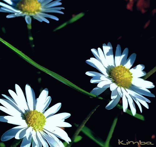 Taking Photos Beautiful Beauty In Nature Beautiful Nature Flower Flowers Beautiful Flower, Natural Color, Relaxing Enjoying Life EyeEm Best Shots Igers Igbest Iger Iggermany Igsuper_shotz Ignature