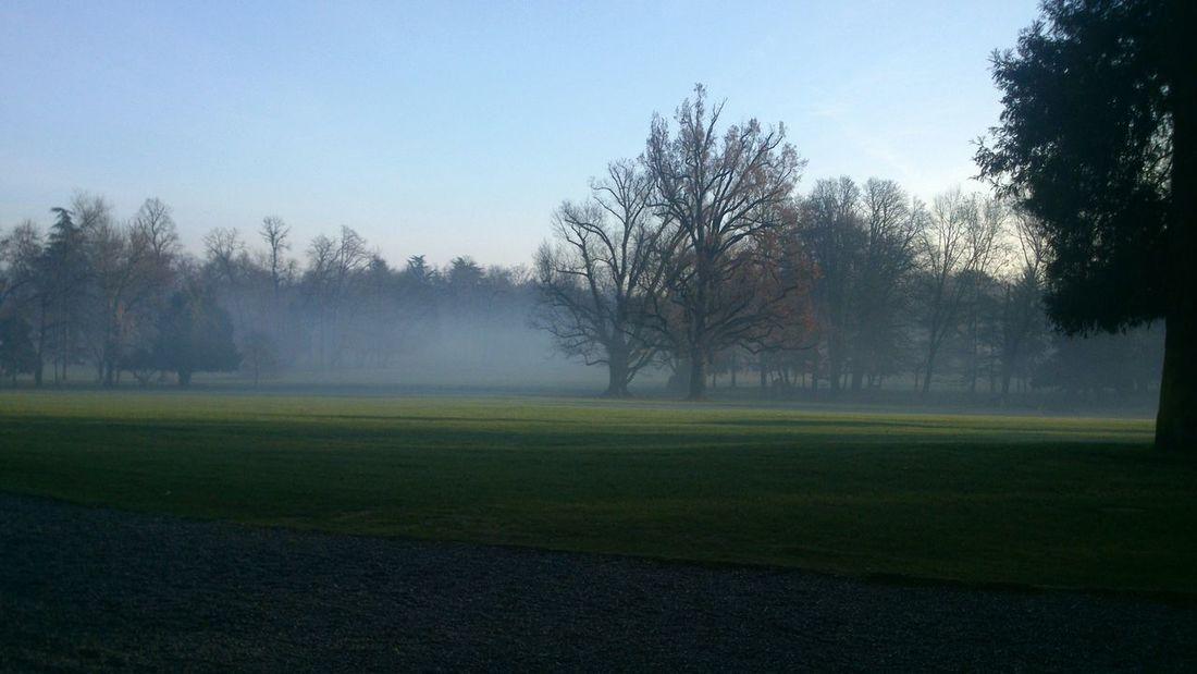 Foggy Christmas morning