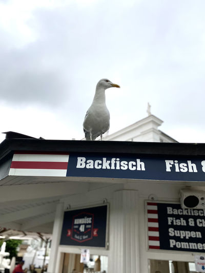 Low angle view of seagull perching on sign against sky