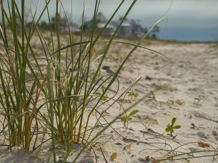 Close-up of grass on sand