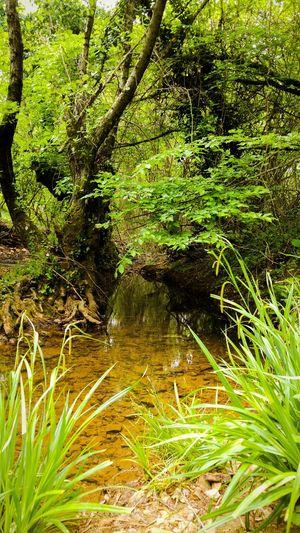 Paradise 🎈 Paradise Heaven Nature Turkey Turkish
