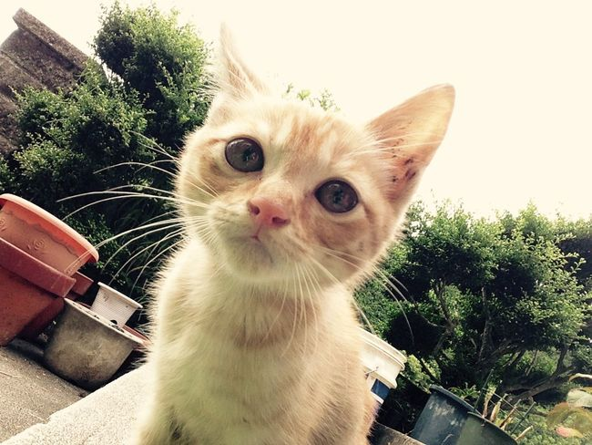 朝から元気なネコですね〜🐈