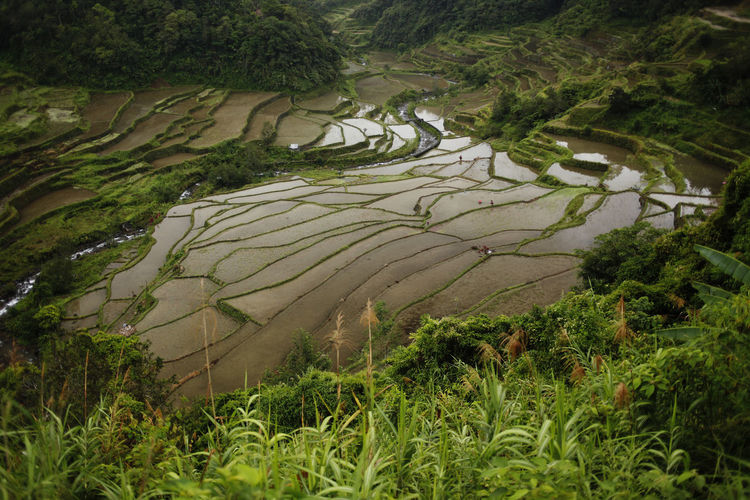 Plant Growth Tree Nature Green Color No People Day Beauty In Nature Land Environment Landscape Scenics - Nature Tranquility Water Field High Angle View Grass Outdoors Architecture Rise Banaue Philippines Luzon
