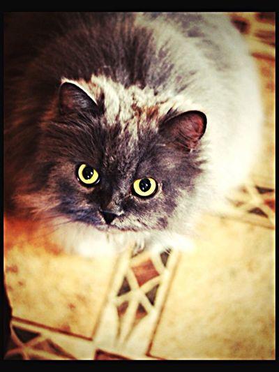 Котик!! Очень красивый и пушистый !!! Taking Photos