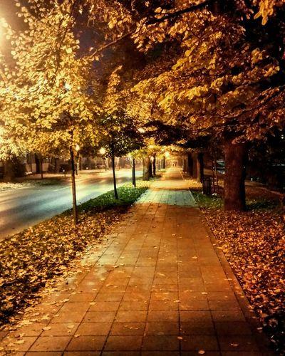 Sarajevo at ni🍂ht Walking Around Relaxing Walking Autumn Colors Citylights
