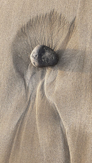 High angle view of a horse on sand