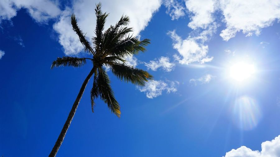 Australia Beauty In Nature Beneath The Tree Blue Blue Sky Clear Day Growth Happy Low Angle View Nature No People Outdoors Palm Tree Palm Trees Scenics Silhouette Sky Summer Sunny Tall - High Tranquil Scene Tranquility Warm