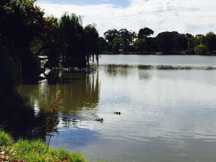 Lake Ducks Escaping Nature Enjoying The Sun Taking Photos Enjoying Life