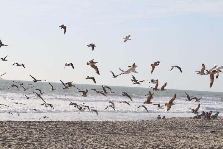 Flock of seagulls flying over beach against sky