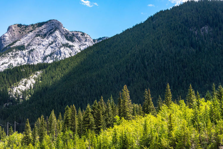 Mountain Tree Scenics - Nature Beauty In Nature Plant Tranquil Scene Tranquility Forest Nature Non-urban Scene Environment Land Sky Mountain Range No People Day Green Color Growth Landscape Idyllic Outdoors Pine Tree Coniferous Tree WoodLand Mountain Peak